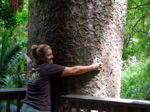 Tiffany and a Kauri