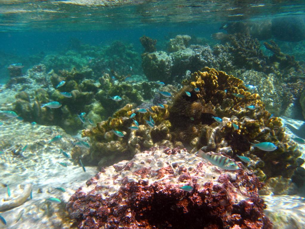Back In Bora Bora