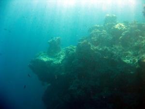 CoralHead