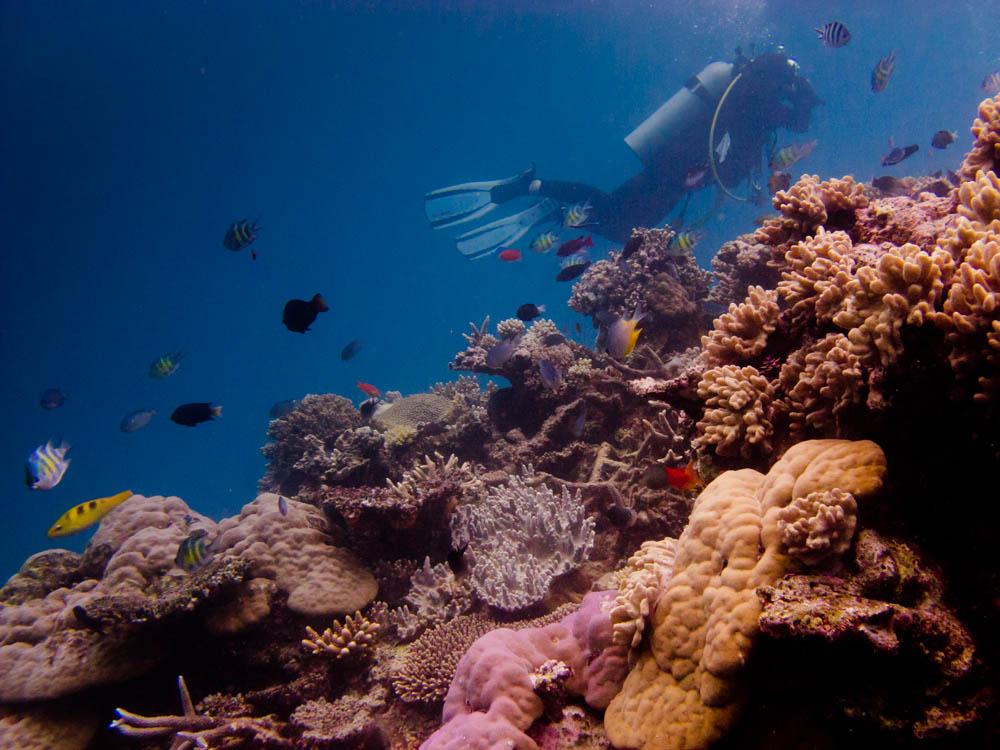 Safari Diving